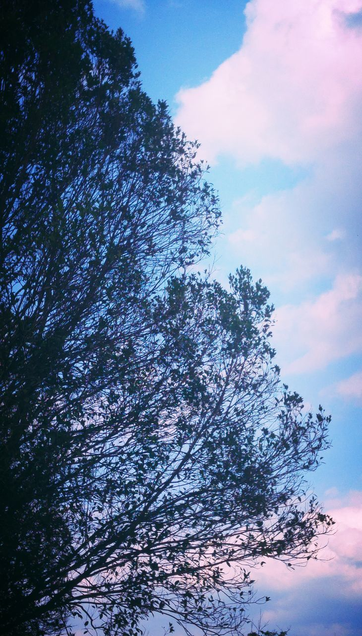 tree, sky, low angle view, beauty in nature, nature, no people, tranquility, cloud - sky, day, outdoors, tranquil scene, growth, branch, scenics