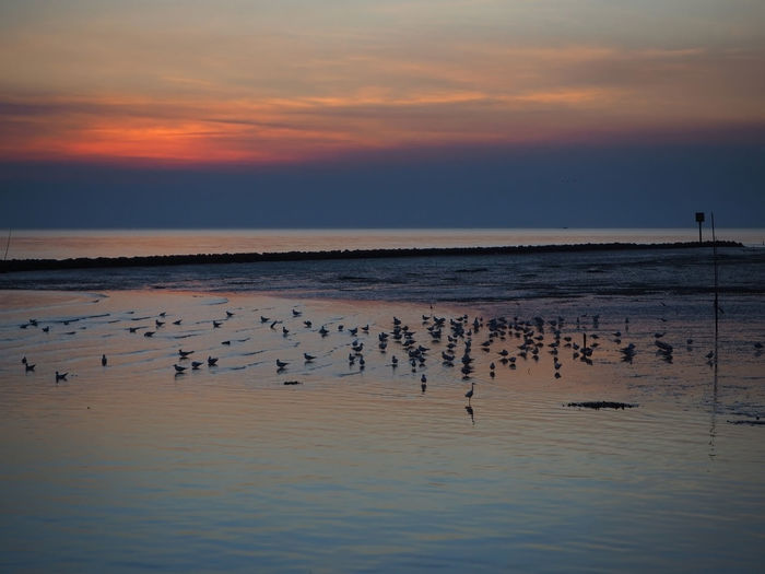 Silhouette Birds On Shore At Sea Against Sky During Sunset