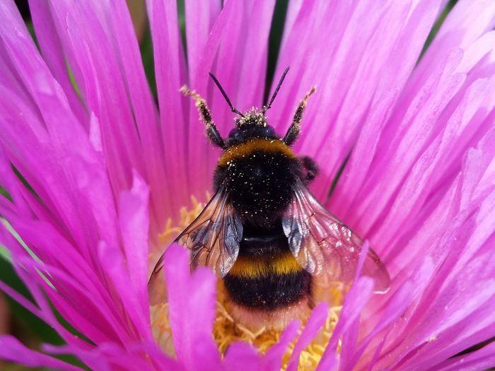 Bee Bee bees