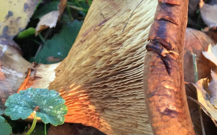 Pilze Edible Mushroom Fungus Pilzfund🌾 Nature Close-up Growth No People Leaf Plant Outdoors Day Tree Tree Trunk Beauty In Nature Fragility Freshness Pilze 🌾 Fungi