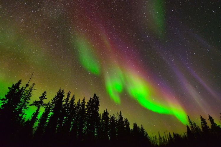 Northern lights Night Green Color Beauty In Nature Space Astronomy Star - Space Sky Tranquility No People Nature Aurora Polaris Scenics - Nature Awe Illuminated Tranquil Scene Majestic Low Angle View Environment Plant Tree