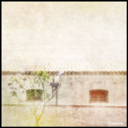 No title || Inmacm Tree Windows Roof arbol ventanas tejado