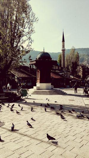 EyeEmNewHere Tree Clear Sky Freshness Sarajevo BiH 🌏😍