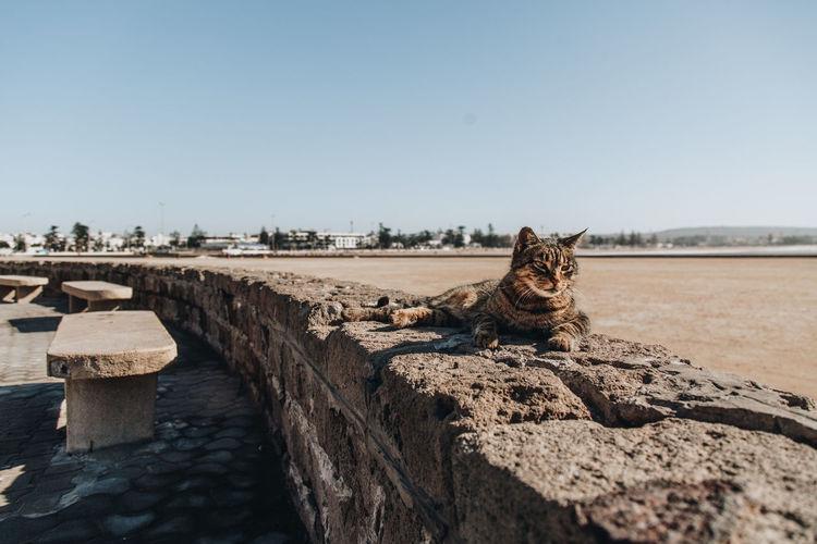 Cat sitting on retaining wall