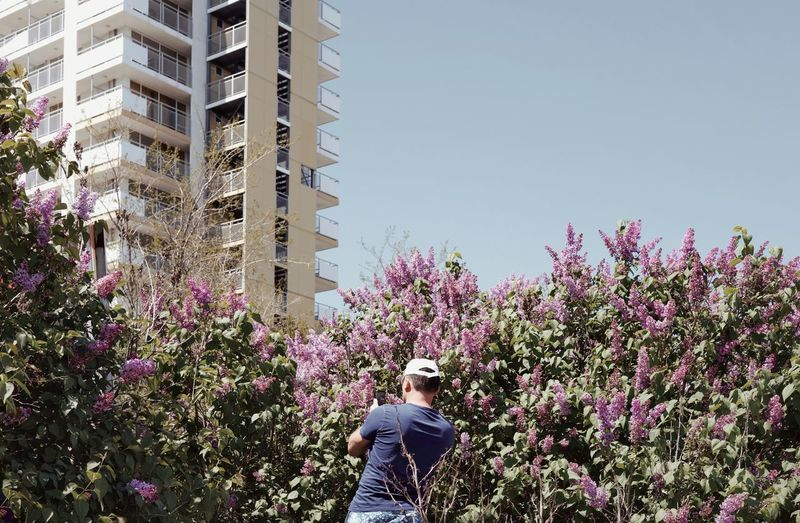 Rear view of man standing by flowering trees