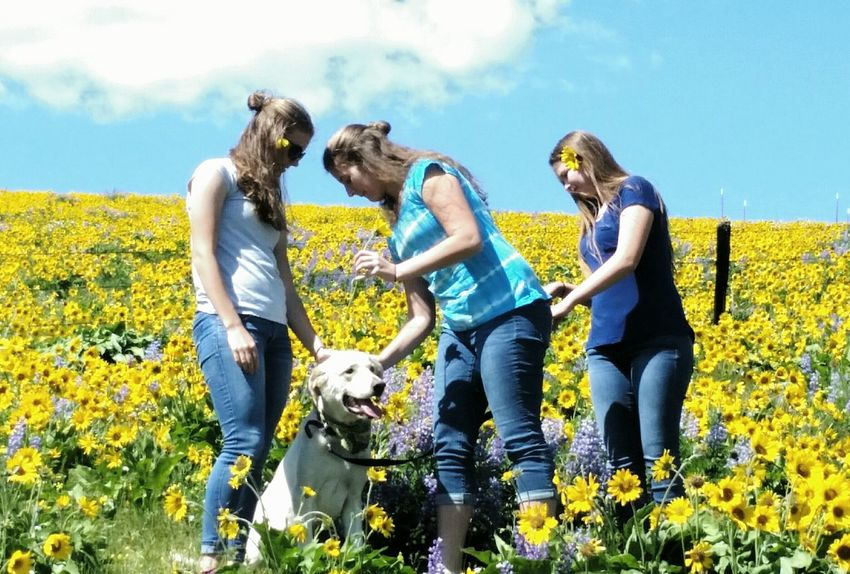Hanging Out Enjoying Life Taking Photos Dogslife Dog Balsam Root & Lupine Sol Flowers Flowers, Nature And Beauty Colour Of Life Awesome