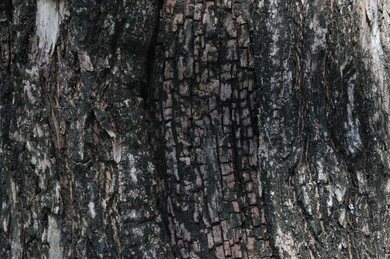 Architecture Backgrounds Bark Built Structure Close-up Day Full Frame Nature No People Outdoors Pattern Rough Textured  Tree Tree Trunk Wood - Material