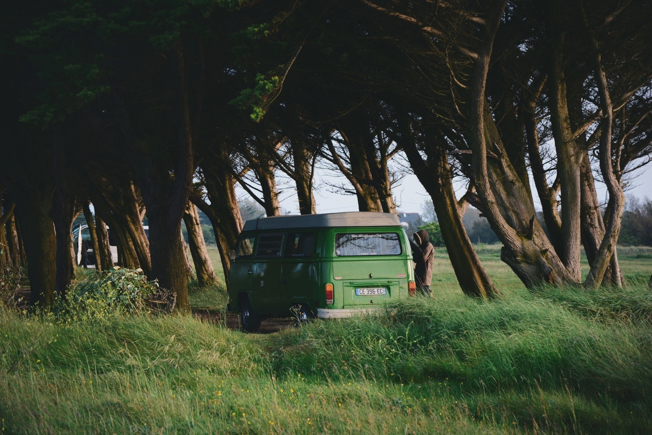 tree, grass, transportation, land vehicle, mode of transport, car, field, green color, growth, nature, grassy, tree trunk, sunlight, outdoors, travel, day, landscape, tranquility, no people, plant