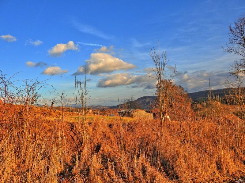 Beauty In Nature Blue Cloud Cloud - Sky Day Field Grass Growing Growth Horizon Over Land Idyllic JarO Landscape Nature No People Non Urban Scene Non-urban Scene Outdoors Plant Remote Rural Scene Scenics Sky Tranquil Scene Tranquility