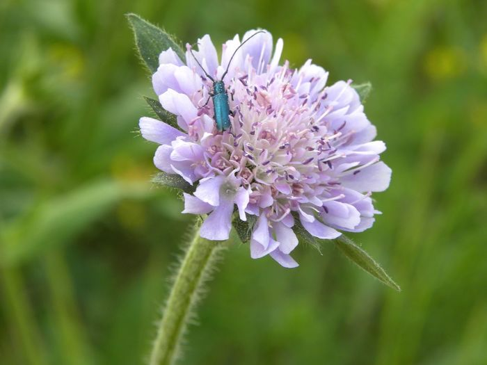 Macro Photography Bugs Green Bugs Flower Head Flower Closing Insect Petal Purple Uncultivated Plant