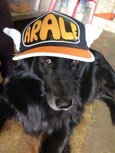 Prang3yod Dog Thailand Cute