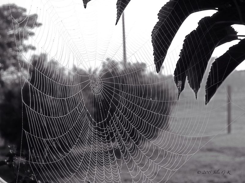 1 of 3 ..Finally found it... And so many more! So excited! EyeEm Best Shots - Black + White Spider Web EyeEm Tadaa Community Eye4photography  EyeEm Landscape Eye4nature EyeEm Nature Lover EyeEm Best Shots - Landscape From My Archives photo was taken by me back in 2008 when I still had my Fuji camera.