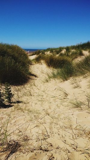 Sand Sand Dune Clear Sky Sunny Nature Sky Beach Day Outdoors Landscape Arid Climate Summer No People Scenics Beauty In Nature Formby Chilling Out Kids Playing Hide & Seek