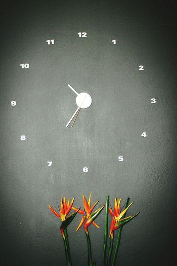 Clock Simple Photography Flowers Minimlism