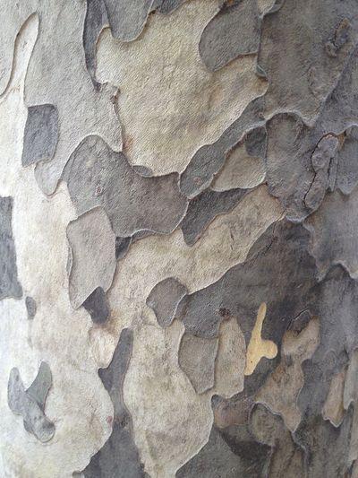 EyeEmNewHere Platano Tree Close-up Mimetic Nature Pattern Textured
