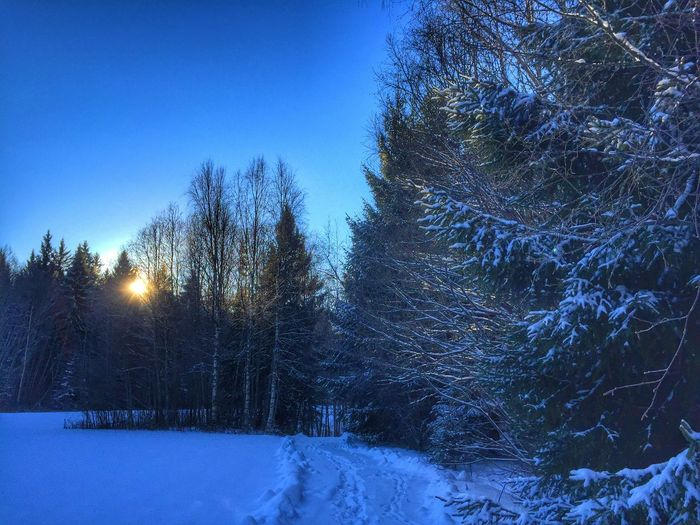 Winter love ?❄️? Tadaa Community January Days Eye Em Best Shots EyeEm Nature Lover Trees