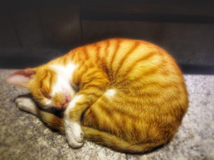 Cat Cat♡ Cat Lovers Kedi Kedicik Kedidir Kedi Kedi Aşkı Kedidirkedi Kediseverler Kedicik 🐈 Kediaşkı Sleep Sleeping Sleeping Cat Relaxing Happy :) Sevimlisey😍 Sevimli Sevimlikedi Sweety  SwEeTy🎀 Sweet