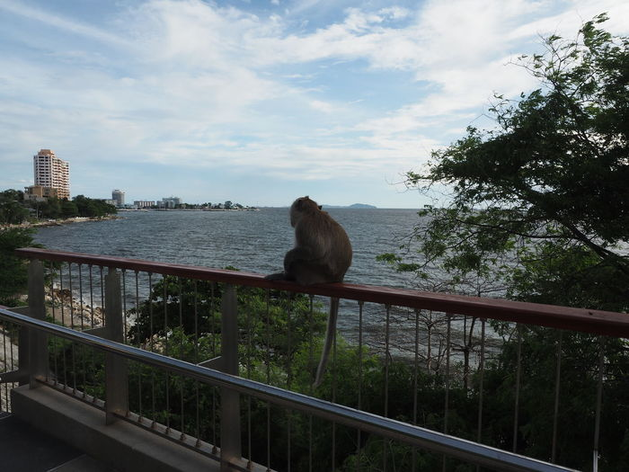 View of an sitting on railing against sky