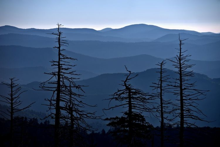 Silhouette trees on mountain against sky