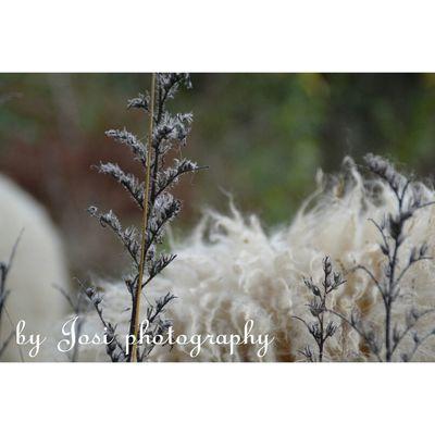 NikonD3100 By Josi Photography Naturelovers