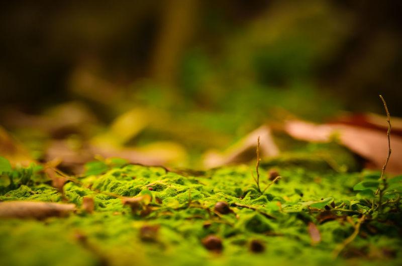 Full frame of leaves on ground
