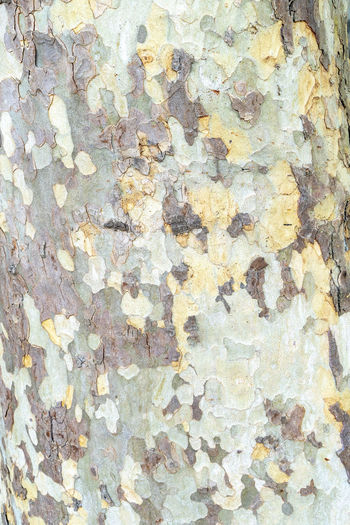 Abstract image of patchy tree bark Backgrounds Full Frame Textured  Pattern Rough Close-up No People Day Built Structure Outdoors Nature Abstract Textured  Tree Bark Rough Surface Patchy Colors Colour Patchwork Tree Trunk Detail Plant Natural