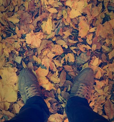 """Stand For Land Autumn Fall Leafs پاییز آمدست که خود را ببارمت\پاییز لفظ دیگر""""من دوست دارمت""""\بر باد می دهم همه ی بود خویش را\یعنی تو را به دست خودت می سپارمت\پاییز من،عزیز غم انگیز برگریز\یک روز می رسم و تو را می بهارمت.""""سید مهدی موسوی"""""""