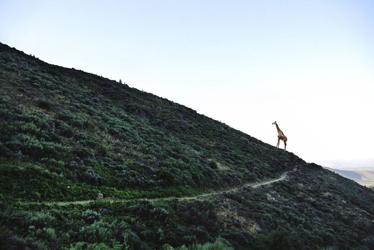 Full length of woman standing on mountain landscape