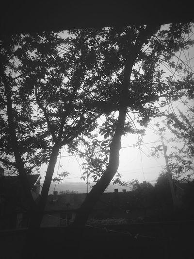 Tree Art Tree And Sky