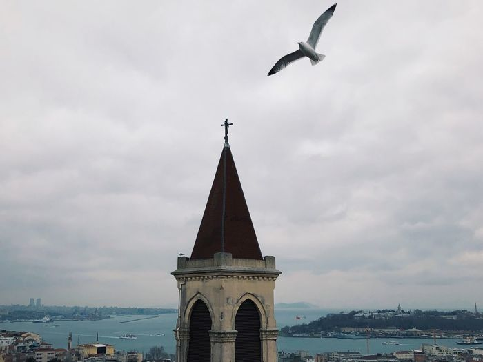 Istanbul Enjoying Life EyeEm Gallery Eye4photography  EyeEm Best Shots cityscapes City Life City View  Cityscape Seagull Istanbul Traveling Architecture Architecture Built Structure Building Exterior Sky Cloud - Sky Flying Animal Themes Bird Travel Destinations City Tower Nature Building