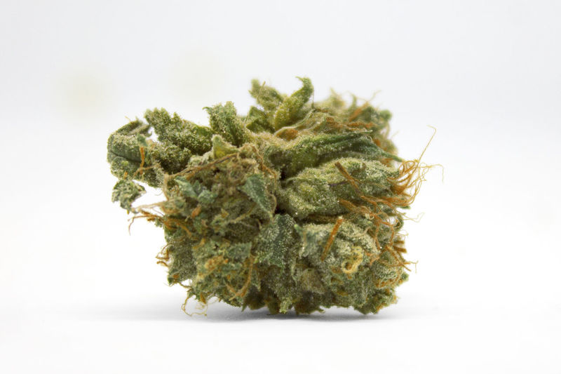 Medical marijuana flower. Cannabis bud photography for dispensary menu. Weed strain Weed Life Weed Smoke Cannabis Plant Cannabis Cannabis - Narcotic Marijuana Marijuana - Herbal Cannabis Stoner Pot Medical Cannabis Herb Herbal Medicine Alternative Medicine Medicine 420 Healthcare And Medicine Bud Buds Flower Plant Drugs Addiction Smoke Weed SMOKE WEED EVERYDAY