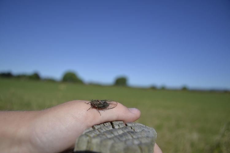 Cicada Hand