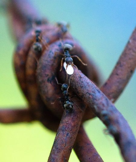 Close-up of insect on rusty metal
