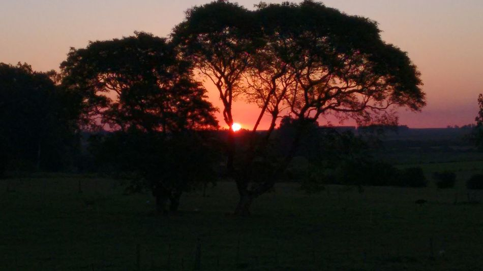 Tree Sunset Nature Silhouette Beauty Growth Sun Scenics Outdoors No People Sky