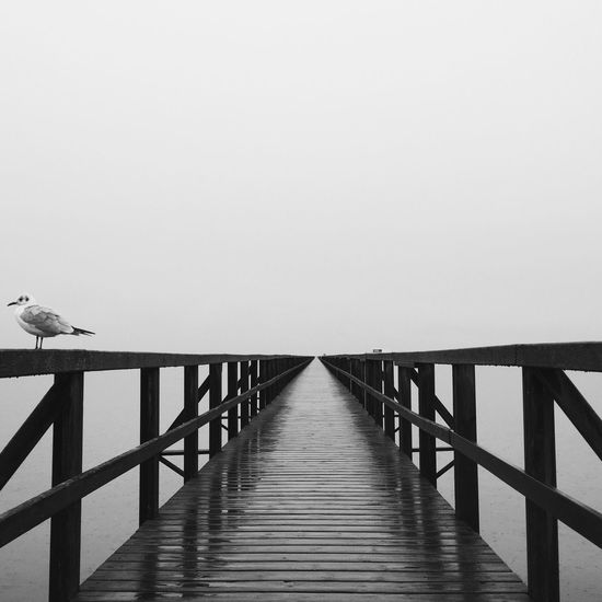 Little gull perching on footbridge railing against sky