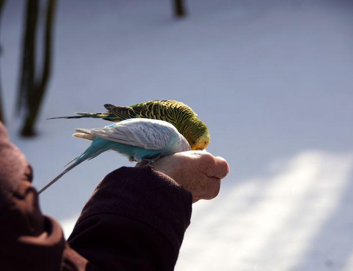 Close-up of hand holding bird against sky