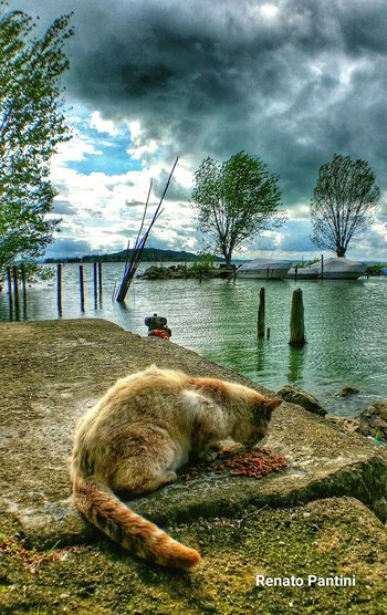 In riva al Trasimeno Trasimenolake Sanfeliciano Umbria Italia Italy HDR Hdr_Collection Taking Photos Gatto Cat Cats Gatti Feeding Animals Stray Cat Feeding Cat Samsung Galaxy S5 GalaxyS5 Snapseed Snapseed Editing  Gatti Randagi