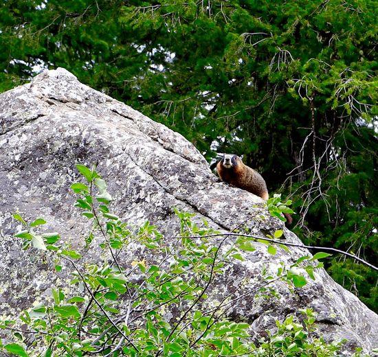 Squirrel perching on tree