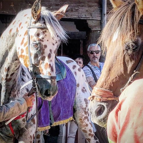 Medievales en Ayllón Caballos Fiesta Medieval Horses Horse Real People Women Lifestyles Mammal Day Sunglasses Domestic Animals People Domestic