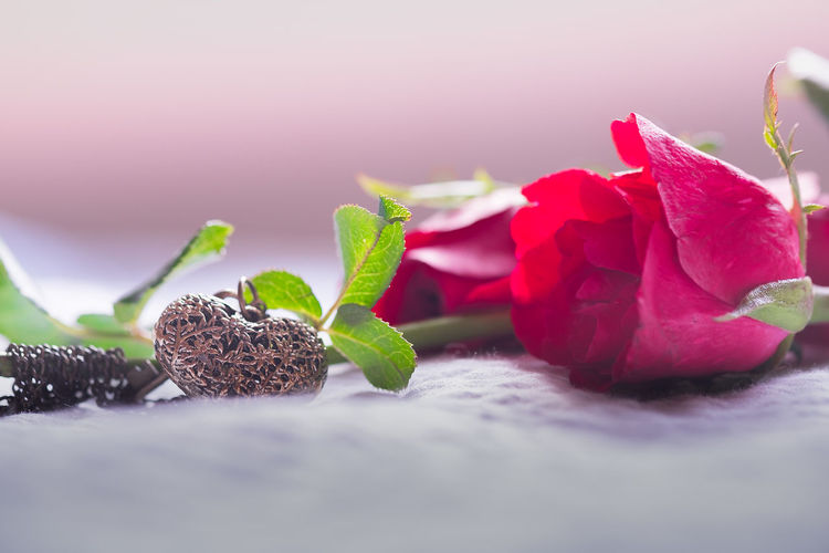 Celebration Holiday Love Pink Soft Valentine Anniversary Beauty In Nature Close-up Day Flower Fragility Freshness Growth Heart Indoors  Leaf Locket Nature No People Red Color Represent Roses Selective Focus Symbol