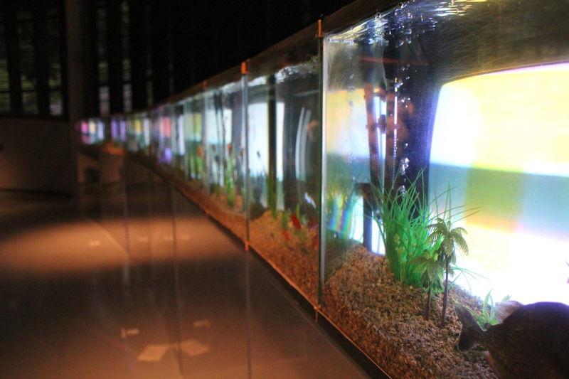 Art Art Center ArtWork Fish Bowl Illuminated Modern Art PaikNamJun Selective Focus Television Tv My Favorite Place