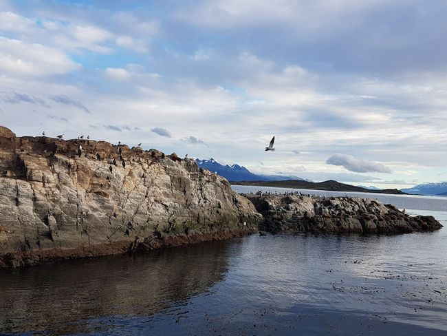 Beagle Channel Bird Boat Ride Riderich Dream Honeymoon Dreams Nature In Ushuaïa Ushuaia Argentina Argentina Pic Argentina Photography Argentina