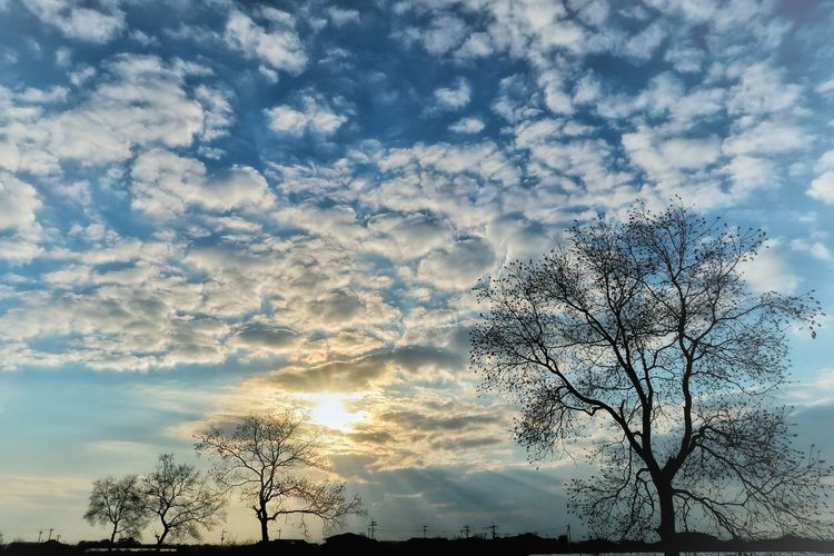 Nature Nature Photography EyeEm EyeEm Best Shots EyeEm Nature Lover EyeEm Gallery 空 並木道 雲 木 夕日 夕陽 夕焼け Sky Low Angle View Cloud - Sky Tree Silhouette Nature No People Outdoors Beauty In Nature Growth Day