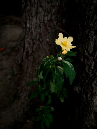 Flower Plant Nature Leaf Growth Tree Trunk Flower Head Beauty In Nature