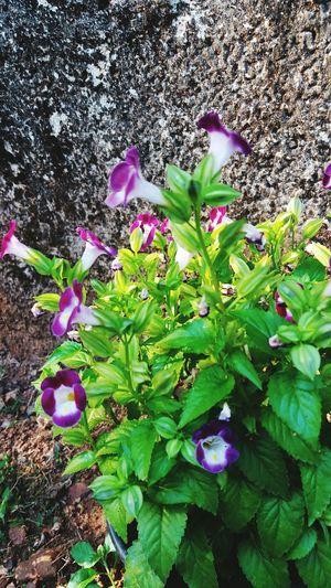 Mygardenflower Flowers Macro Beauty MyClick Kerala Gods Own Country Goodevening