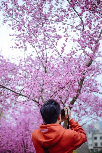 Woman with pink cherry blossoms against sky