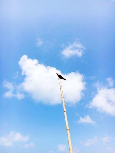 Crow Bird Bird Watching Bird Photography Birds_collection Sky View Blue Sky Blue Chirpingbird Jungle Book