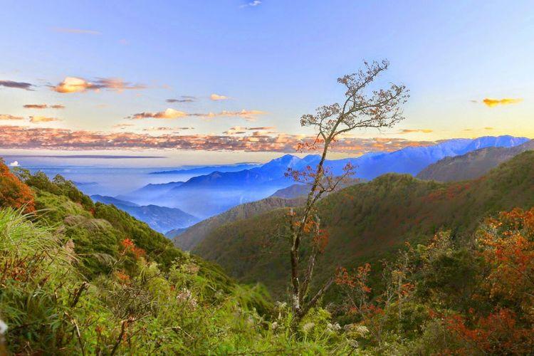 Taiwan, Near mount Alisan Landscape Tree Outdoors Sunset Forest