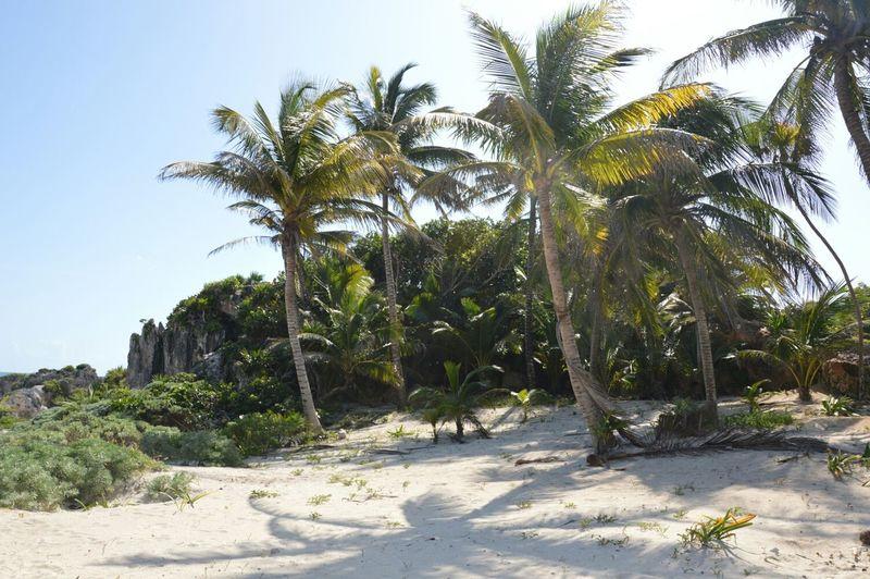 Tulum Beach ( Mexico) Travel Beautiful Yúcatan Mexico