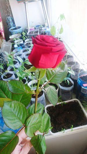 Greenhouse Flower Variation Plant Flower Head